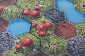gros plan sur les champignons qui ne rapportent rien...