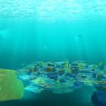 Aquasphere_page_de_garde