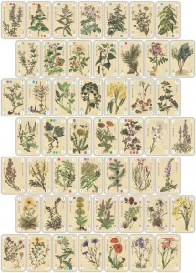 officinalis-cartes