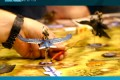 Essen 2015 – jeu Tail Feathers – Plaid Hat Games – VOSTFR