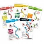 Bios Genesis cards