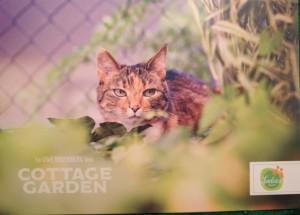 La carte postale-goodies qui envoie de l'herbe à chat
