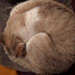ça, c'est une photo de mon chat. Et hop, + 100 vues sur l'article.