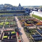 jardin-francais