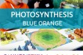 CANNES 2017 – Photosynthesis