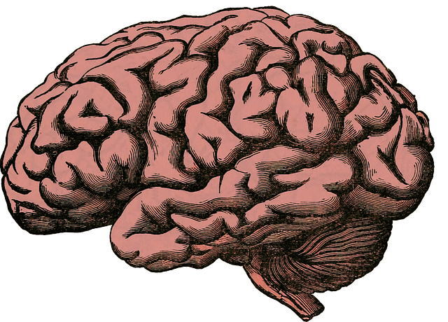 Brains_cerveau.jpg
