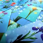 Blossoms-ludovox-jeu-de-societe-cards