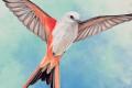 Wingspan : les oiseaux font le printemps !